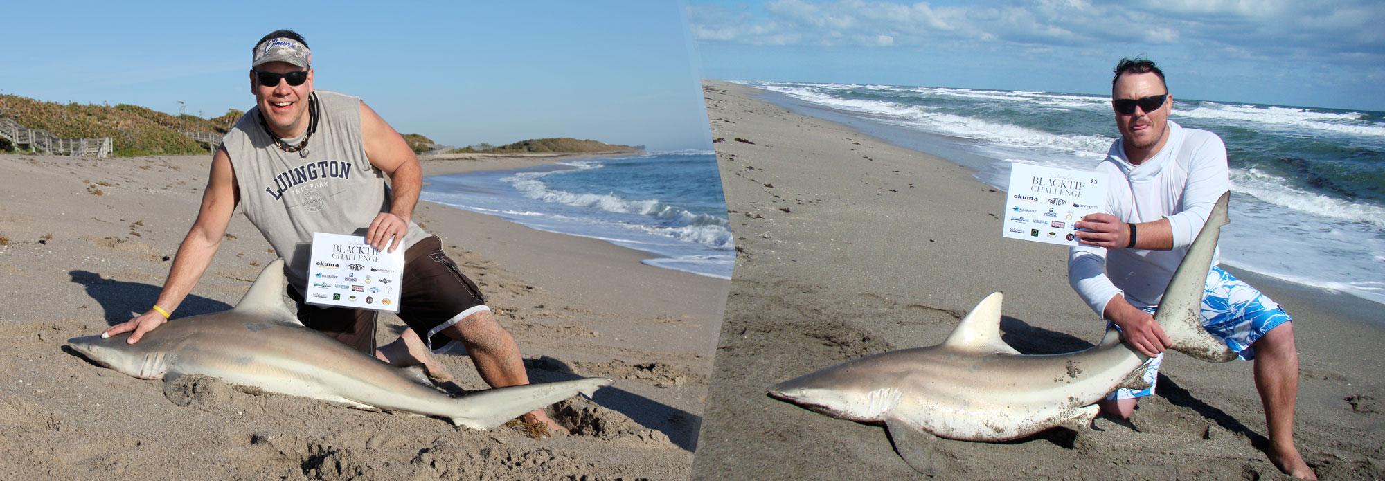 Blacktip shark caught in the Blacktip Challenge shark fishing tournament