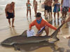 Junior angler Cameron McClellan caught this dusky shark during the 2014 Blacktip Challenge shark fishing tournament in Florida
