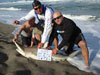 Blacktip shark caught by Team Reel Warriors in the 2015 Blacktip Challenge